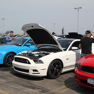 2014 50th Anniversary Mustang Show West Herr 030