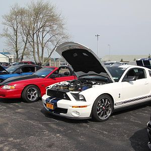 2014 50th Anniversary Mustang Show West Herr 043