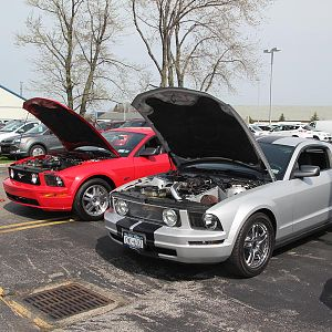 2014 50th Anniversary Mustang Show West Herr 046